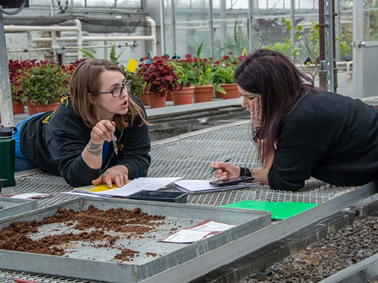 Horticulture students working in a greenhouse