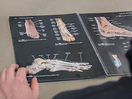 Student studying anatomy illustrations of the foot